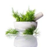 Πράσινος άνηθος στο γουδοχέρι ένα κονίαμα στο άσπρο υπόβαθρο Στοκ Εικόνες