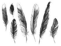 水彩黑白单色羽毛集合 免版税库存照片