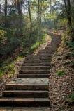 森林石台阶 免版税库存照片