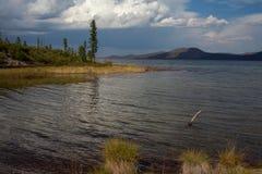 大湖,落叶松属和白色云彩岸的  免版税库存图片