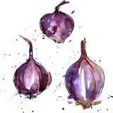 传染媒介水彩紫洋葱 免版税库存照片