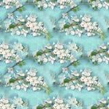 高雅花卉无缝的样式 进展的苹果树分支 开花的树纹理 樱花 库存图片