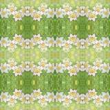 与华丽水仙的无缝的样式开花或在绿色背景的黄水仙 免版税库存照片