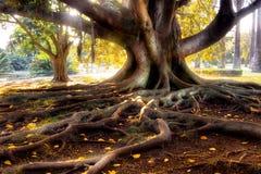 百岁人结构树 免版税库存照片