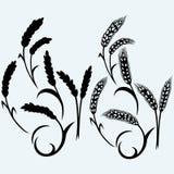 蓝色耳朵黑麦天空二麦子 免版税库存照片