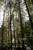 Ψηλά δέντρα Στοκ φωτογραφία με δικαίωμα ελεύθερης χρήσης