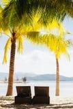 与热带的棕榈的海滩胜地 免版税图库摄影