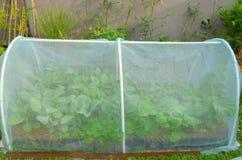 新鲜蔬菜在有网的被上升的床庭院里在家庭菜园 库存图片