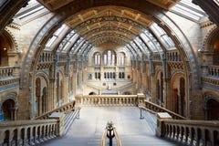 自然历史博物馆内部在伦敦,没人 库存照片