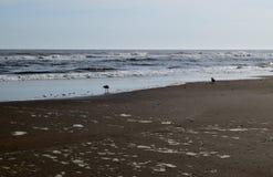 海、沙子和海鸥 图库摄影