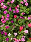 цветок кровати Стоковое фото RF