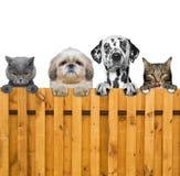 狗和猫神色通过篱芭 免版税库存图片