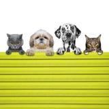狗和猫神色通过篱芭 库存照片