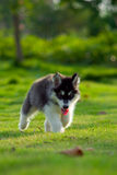 собаки немногая Стоковое фото RF