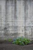 有蓝色花的混凝土墙 免版税库存图片