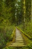 在可可西里山雨林奥林匹克国家公园华盛顿州的足迹桥梁 库存照片