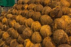 被堆的许多椰子 免版税库存图片