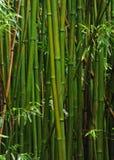 竹森林,毛伊,夏威夷 免版税库存图片