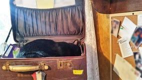 小睡的猫 库存照片