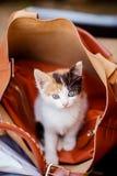 Котенок в сумке Стоковая Фотография