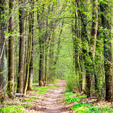 δασική πράσινη άνοιξη Στοκ Εικόνες