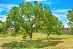 Πράσινο πάρκο με τα δέντρα και το μπλε ουρανό Στοκ εικόνα με δικαίωμα ελεύθερης χρήσης
