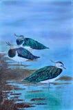 在湖岸A的鸟 免版税库存图片
