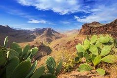 大加那利岛海岛山风景  免版税库存照片