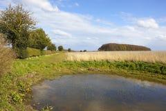 Μικρή αγροτική λίμνη με το διαχωριστικό φράχτη κραταίγου Στοκ εικόνες με δικαίωμα ελεύθερης χρήσης