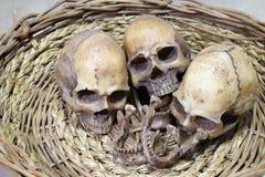 与人的头骨小组的静物画摄影 免版税图库摄影