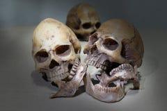 与人的头骨小组的静物画摄影 免版税库存照片