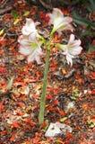 Λουλούδι άνθισης τέσσερα Στοκ Φωτογραφία
