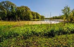 Весна в Айове Стоковое Изображение