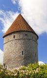 中世纪塔、一部分的城市墙壁和开花的丁香 爱沙尼亚塔林 免版税库存图片