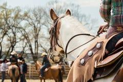 在西部种族的驯马,在桶赛跑的事件的美丽的油漆马在圈地 图库摄影