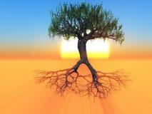 Корни и дерево Стоковые Фотографии RF