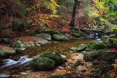 小河在秋天森林里 图库摄影