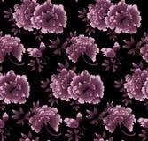 Цветочный узор пиона на черной предпосылке Стоковые Изображения RF