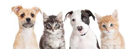 逗人喜爱的小狗和小猫水平的横幅  图库摄影