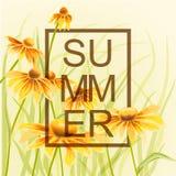 与绿色叶子花卉元素的橙色和黄色花 库存图片