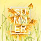 与绿色叶子花卉元素的橙色和黄色花 免版税库存照片