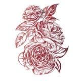 Флористический зацветая розовый эскиз иллюстрации вектора ветви Стоковая Фотография