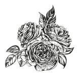 Флористический зацветая розовый эскиз иллюстрации вектора ветви Стоковое фото RF