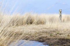沼泽土地在冬天 库存图片