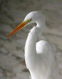 苍鹭纵向白色 免版税图库摄影
