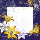 Абстрактный эскиз иллюстрации вектора предпосылки лилий поздравительной открытки флористический зацветая нарисованный рукой Стоковые Фото