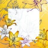 Абстрактный эскиз иллюстрации вектора предпосылки лилий поздравительной открытки флористический зацветая нарисованный рукой Стоковое Фото