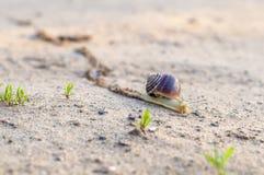 慢慢地爬行往它的目标的蜗牛 免版税图库摄影