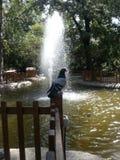 爱鸟在水池心脏 免版税库存图片