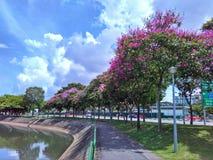 开花的树,新加坡 库存图片